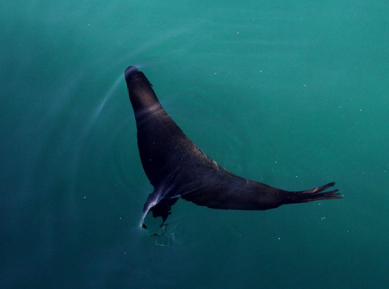 Sea lion ballet